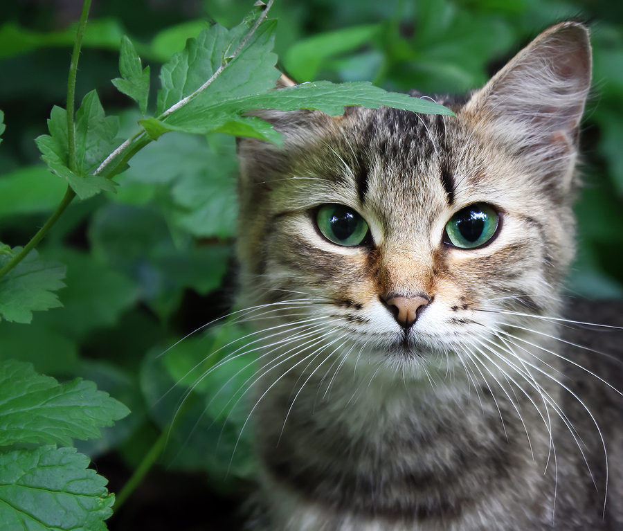 How To Tell The Difference Between A Feral Stray And Outdoor Cat Dundas Euclid Animal Hospital