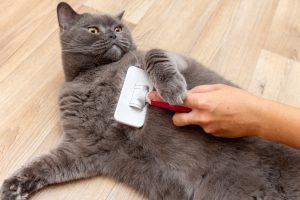 Cats will need your help for grooming