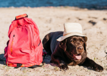 Pet and summer heat protection