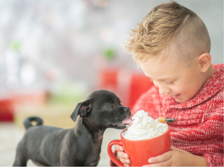 Cocoa is toxic for dogs Dog-Proof your Christmas